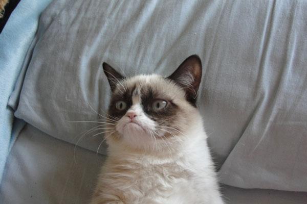 Tarder Sauce the grumpy cat!