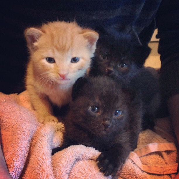 These are the adorakittens Simone found a foster home for! Oh gawwwwd! If you live in LA, get in touch to adopt a baby!