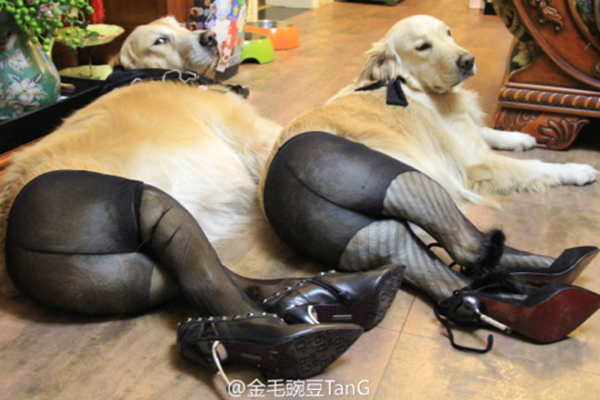 dogs-in-pantyhose