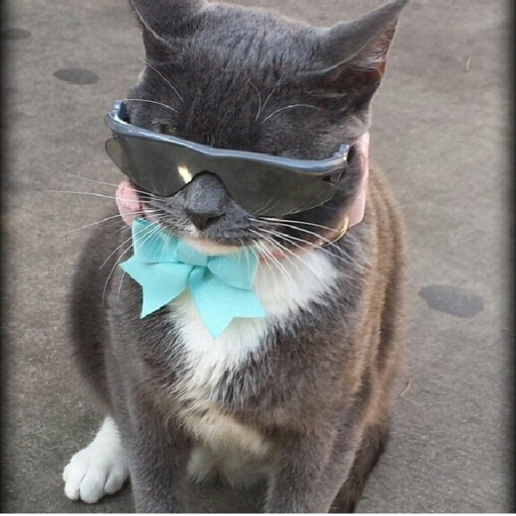 Kittybagel the eyelid-less sunglass-wearing cat can be stalked at http://instagram.com/kittybagel.